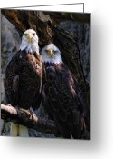 Endangered Species Greeting Cards - Eagles Greeting Card by Edward Sobuta