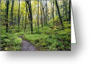 Autumn Photographs Greeting Cards - Early Autumn Hike Greeting Card by Phill  Doherty