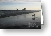 Donations Greeting Cards - Early Morning Beach Stroll Greeting Card by Stav Stavit Zagron