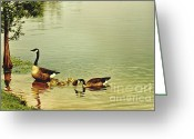 Canada Goose Greeting Cards - Early Morning Lessons Greeting Card by Scott Pellegrin