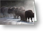 Yellow Line Greeting Cards - Early Morning Road Bison Greeting Card by Bruce Gourley
