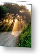 Luminescence Greeting Cards - Early Morning Sunlight Greeting Card by Michelle Calkins