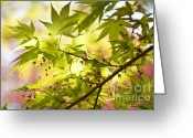 Japanese Maple Greeting Cards - Earth Walk Greeting Card by Susan Cole Kelly
