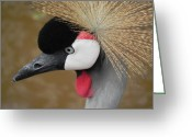 Adrienne Petterson Greeting Cards - East African Crowned Crane Greeting Card by Adrienne Petterson
