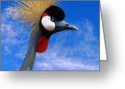 National Bird Greeting Cards - East African Crowned Crane Greeting Card by Methune Hively