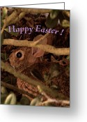 Easter Card Greeting Cards - Easter Bunny Card Greeting Card by Adele Moscaritolo