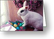 Curtain Greeting Cards - Easter bunny Greeting Card by Garry Gay
