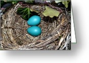 Beginnings Greeting Cards - Easter Eggs Greeting Card by Michelle Calkins