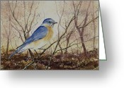  Bluebird Greeting Cards - Eastern Bluebird Greeting Card by Sam Sidders