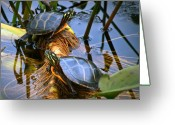 Amphibian Greeting Cards - Eastern Painted Turtles Greeting Card by Bob Orsillo