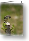 Cute Photo Greeting Cards - Eastern Phoebe Greeting Card by Bob Orsillo