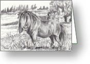 Livestock Drawings Greeting Cards - Easy Keeper Greeting Card by Dana Lysons