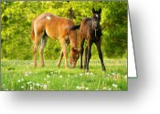 Quarter Horses Greeting Cards - Easy Pickins Greeting Card by Angela Rath