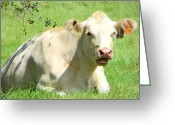 Tofu Greeting Cards - Eat Tofu Greeting Card by Dorothy Menera