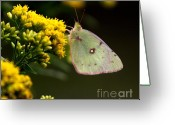 Butterflies And Blue Flowers Greeting Cards - Eating thru a straw Greeting Card by Robert Pearson