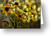 Black Eyed Susans Greeting Cards - Echinacea Greeting Card by Bonnie Bruno