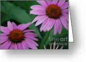 First Star Art By Jammer Greeting Cards - Echinacea Cone Flowers Greeting Card by First Star Art