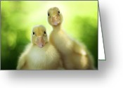 Duckling Greeting Cards - Edgar and Sally Greeting Card by Amy Tyler