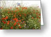 Cornfield Greeting Cards - Edge Of A Field Full Of Poppies Greeting Card by Bob Gibbons