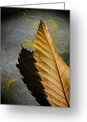 Brown Leaf Greeting Cards - Edge Of Summer Greeting Card by Odd Jeppesen