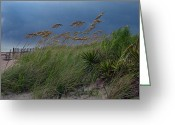 Surf Photos Art Greeting Cards - Edisto Oat Fields Greeting Card by Skip Willits