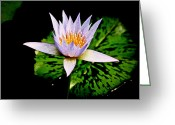 Water Lilly Greeting Cards - Egg Lily Greeting Card by Steve McKinzie