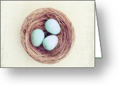 Directly Above Greeting Cards - Eggs Bird Nest Greeting Card by Carolyn Cochrane