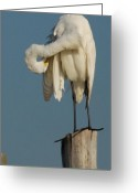 Spirit Hawk Art Greeting Cards - Egret 26 Greeting Card by Joyce StJames
