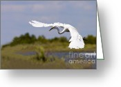Bank Photo Greeting Cards - Egret Ballet Greeting Card by Mike  Dawson
