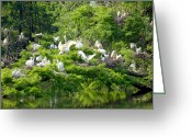 Egret Digital Art Greeting Cards - Egret Estuary Greeting Card by Suzanne Gaff