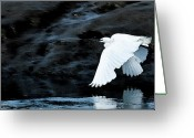 Egret Digital Art Greeting Cards - Egret in Flight Greeting Card by Brian Roscorla