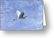 Egret Digital Art Greeting Cards - Egret Passing By Greeting Card by J Larry Walker