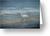 Panama City Beach Greeting Cards - Egret Greeting Card by Sandy Keeton
