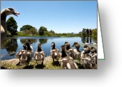 South Africa Greeting Cards - Egyptian geese Greeting Card by Fabrizio Troiani