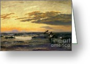 Sportsmen Greeting Cards - Eiders at Sunrise Greeting Card by Pg Reproductions