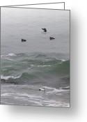 Waves Pyrography Greeting Cards - Eiders In The Surf Greeting Card by Thomas Theroux