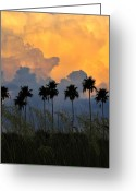 Oats Greeting Cards - Eight Palms Greeting Card by David Lee Thompson