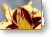 Stamen Greeting Cards - El Desperado (hemerocallis) Greeting Card by Anna Yu