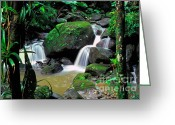 Lush Vegetation Greeting Cards - El Yunque National Forest Waterfall Greeting Card by Thomas R Fletcher