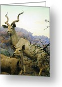In Focus Greeting Cards - Eland On Watch Greeting Card by John Kain