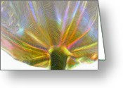 Easter Flowers Greeting Cards - Electric Tulip Greeting Card by Linda Sannuti
