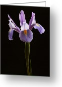 Flower Over Black Photo Greeting Cards - Elegance Greeting Card by Juergen Roth