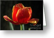 Spring Tulip Greeting Cards - Elegance of Spring Greeting Card by Karen Wiles