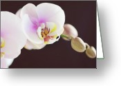 Fragility Greeting Cards - Elegant Beauty Greeting Card by Dhmig Photography