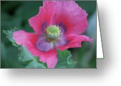 Macro Greeting Cards - Elegant Greeting Card by Kimberly Gonzales