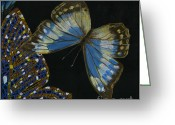 Elena Yakubovich Painting Greeting Cards - Elena Yakubovich - Butterfly 2x2 top right corner Greeting Card by Elena Yakubovich