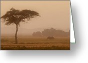 Tree. Acacia Greeting Cards - Elephant and Dust Greeting Card by Joe Bonita