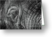 Game Animals Photo Greeting Cards - Elephant Eye Greeting Card by Sebastian Musial