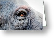 Pain Greeting Cards - Elephant Eye Greeting Card by Selvin