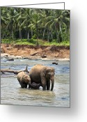 India Greeting Cards - Elephant family Greeting Card by Jane Rix